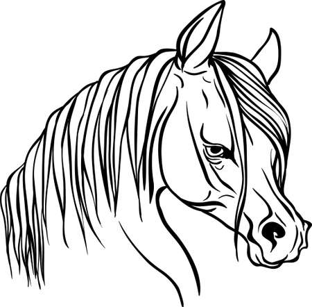 foal: Horse head for coloring book. Illustration