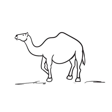 doodle camel illustration hand drawn style vector isolated Stock Illustratie