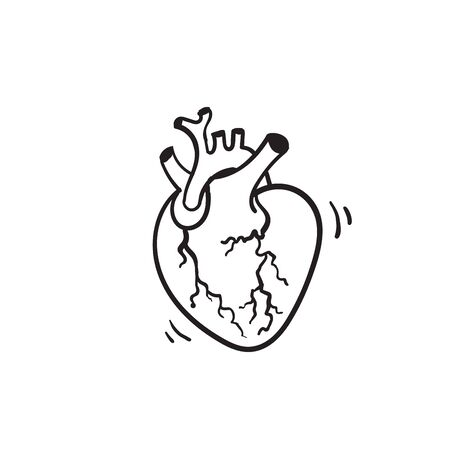 hand drawn vector isolated human heart. Anatomically correct heart with venous system.doodle Illustration