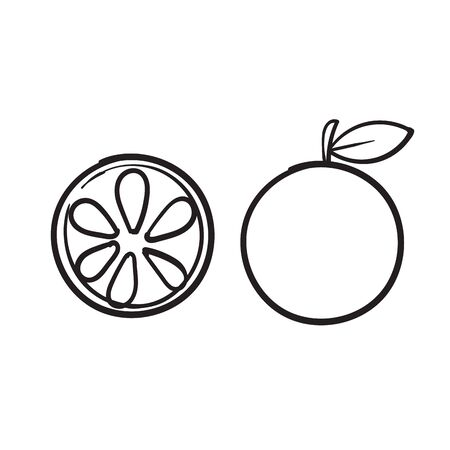 hand drawn doodle orange lime fruit illustration cartoon vector Imagens - 148765740