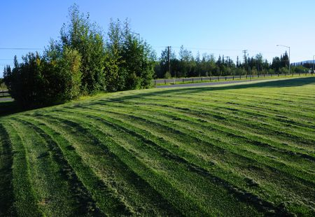 distinctive: Freshly Mowed Lawn with Distinctive Track Markings in the Evening Stock Photo
