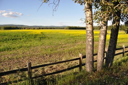 Wildlife Refuge and Historic Farm with Canola Plants in Bloom Stock Photo - 7626855