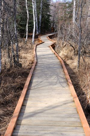 boreal: Boardwalk through a Boreal Forest wildlife refuge in the early spring