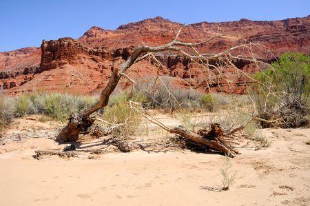 paria: Dead Tree Along Scenic Paria Canyon Trail Stock Photo