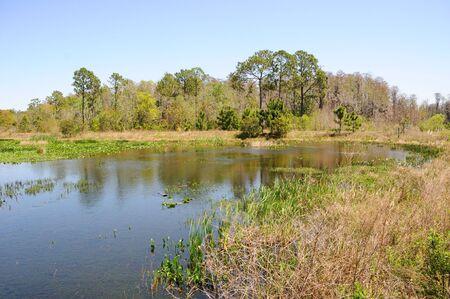 Lake in Florida Marsh Land - Orlando