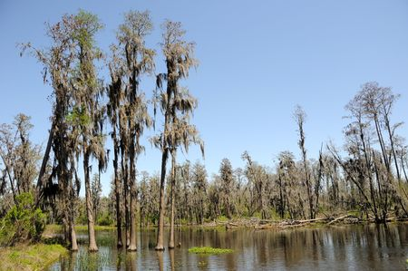 Cypress and Tupelo Standing in Water in Florida Marsh Land