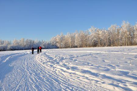 Multi-Use Recreation Trail during Alaska Winter photo