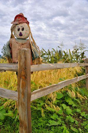 espantapajaros: Espantapájaros en maíz y revisión de squash  Foto de archivo