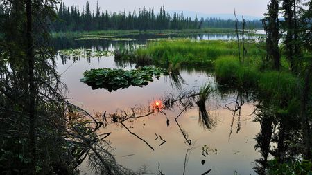 boreal: Vegetation filled Sub-Arctic Lake surrounded by Boreal Forest  Stock Photo