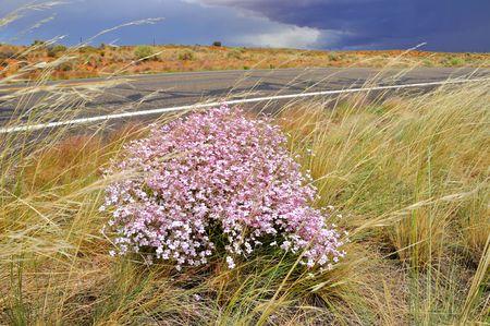 Flowers in Desert Storm photo