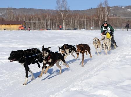 Fairbanks, Alaska, 12 März 2010: Begrenzte nordamerikanischen Sled Dog Race  Standard-Bild - 8491440