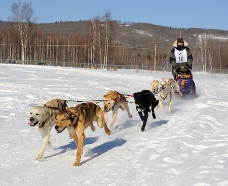 Fairbanks, Alaska, 12 März 2010: Begrenzte nordamerikanischen Sled Dog Race  Standard-Bild - 8491439