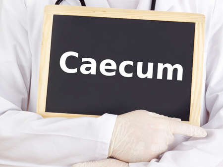 Doctor shows information on blackboard: caecum Stock Photo - 15907509