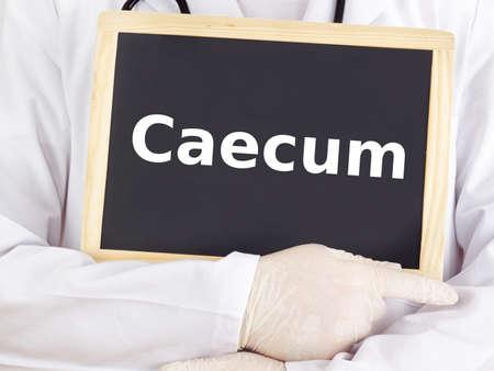 caecum: Doctor shows information on blackboard: caecum Stock Photo