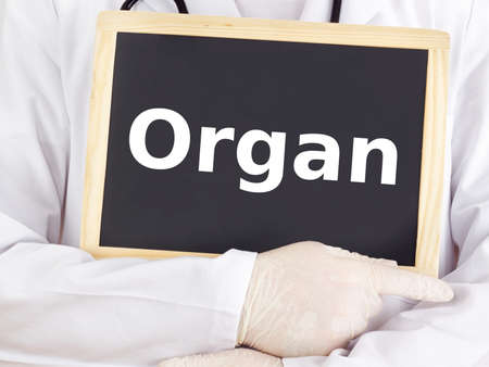 Doctor shows information on blackboard: organ photo