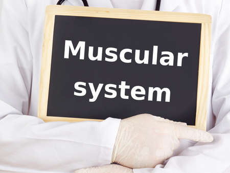 muscular system: Doctor shows information: muscular system