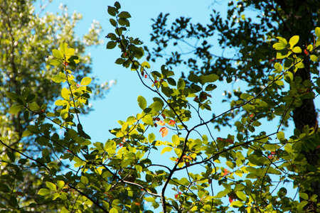 phytology: Leaves