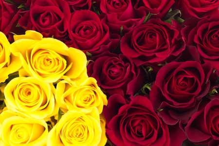 Closeup of roses photo