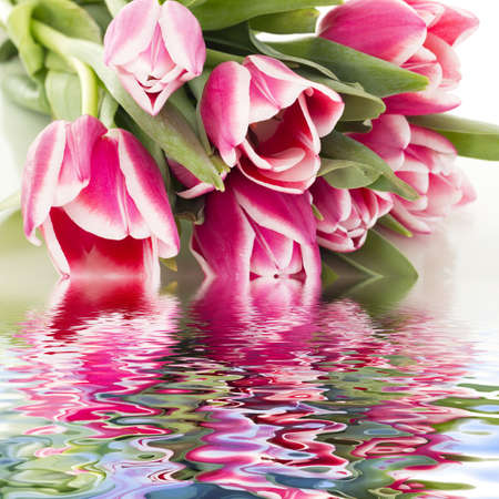 Beautiful bunch of tulips Stock Photo - 17944786