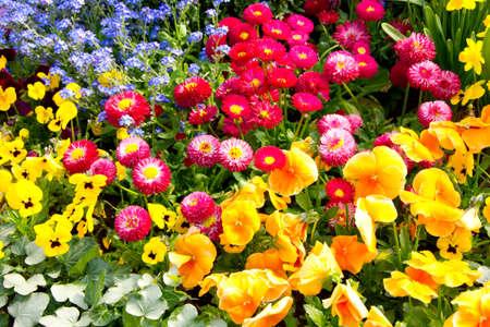 heralds: Heralds of spring