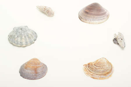 estival: Beautiful seashells with free space for text
