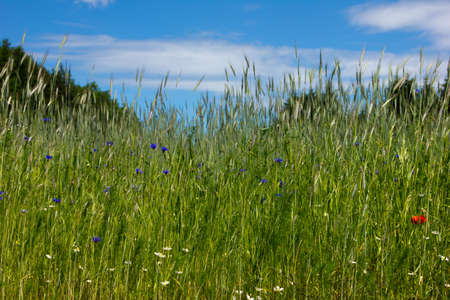 Beautiful landscape of meadow with blue sky photo
