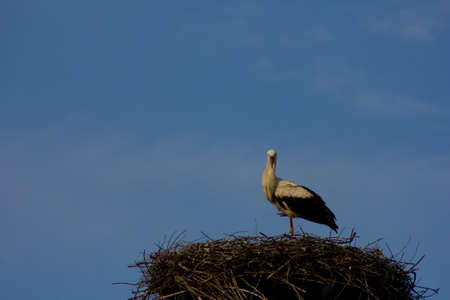 birth prevention: Stork sitting in nest made of twigs Stock Photo