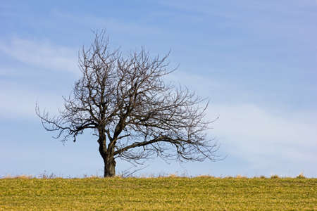 Bare-branched tree at springtime