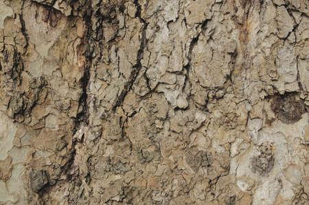 cortex: Close up of a cortex tree. Cortex background.