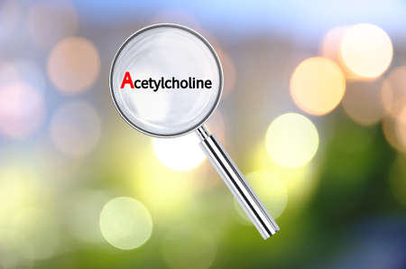 acetylcholine: Magnifying lens over background with text Acetylcholine, with the blurred lights visible in the background. 3D rendering. Stock Photo