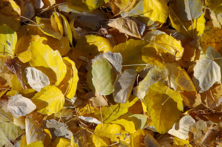 Autumn foliage close-up.