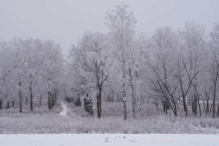 Forest during winter season. 免版税图像