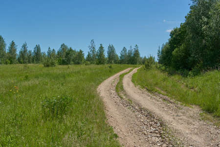 The dirt Road in the forest.