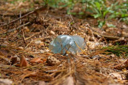 Old plastic bottle in the forest. Stockfoto