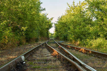 Rail track in a forest. Stockfoto