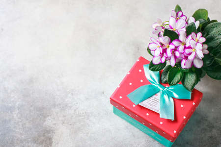 Bouquet of violet with gift box on a white background.