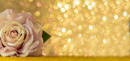 Rose on blurred bokeh background. Blurred abstract holiday background. Banner