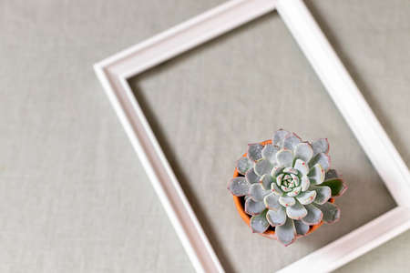 Succulents on a background of linen fabric. Home decor and gardening concept.