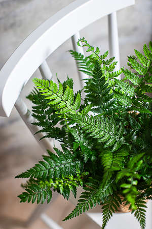 Fern bush on a light background. View from above.
