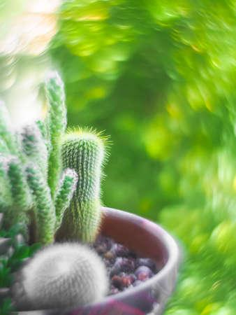 Pot cactus, swirly bokeh the Helios lens. Artistic swirly bokeh made with vintage lens helios-44-2. Houseplants. Selective focus