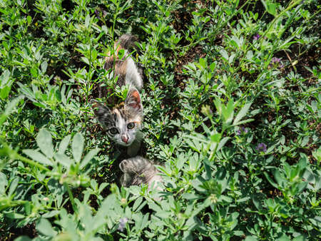 Kitten in the green grass. Nature and a pet. Selective focus Banque d'images