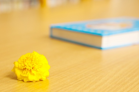 Books and chrysanthemum (knowledge is like flowers) photo