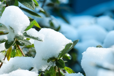 snows: It snows,City and plant a white.