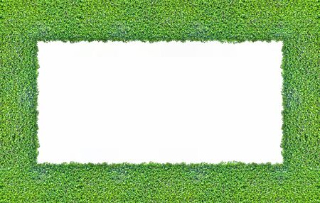 Green plants to the composition of the photo frame Stock Photo - 13103624