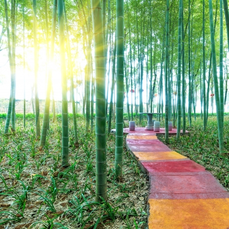 China's bamboo, grows in southern China.