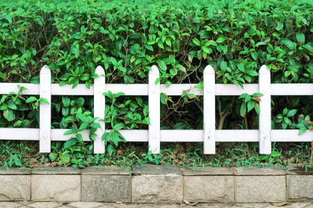 White fence and green plants Stock Photo - 16969560