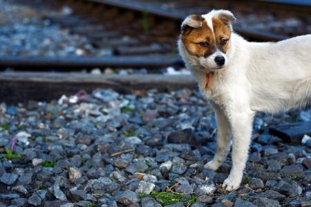 best shelter: lonely sad homeless abandoned dog on tracks Stock Photo