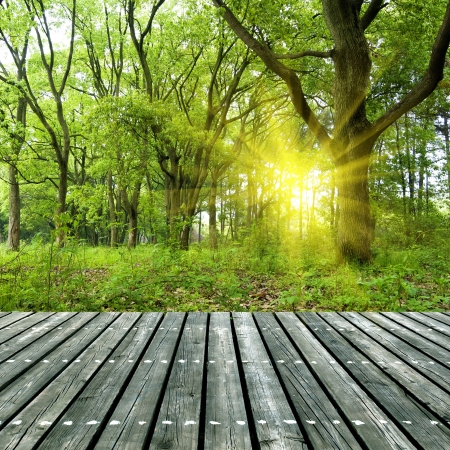 Woods under the sun, the wooden structure of the platform. Stock Photo