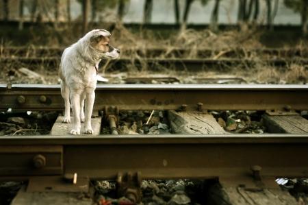 vagrant: The vagrant dog along the railway line Stock Photo