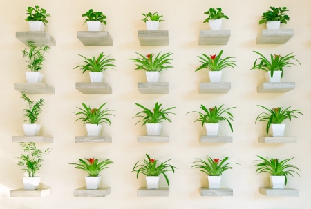 Potted plants: Rows of indoor plants